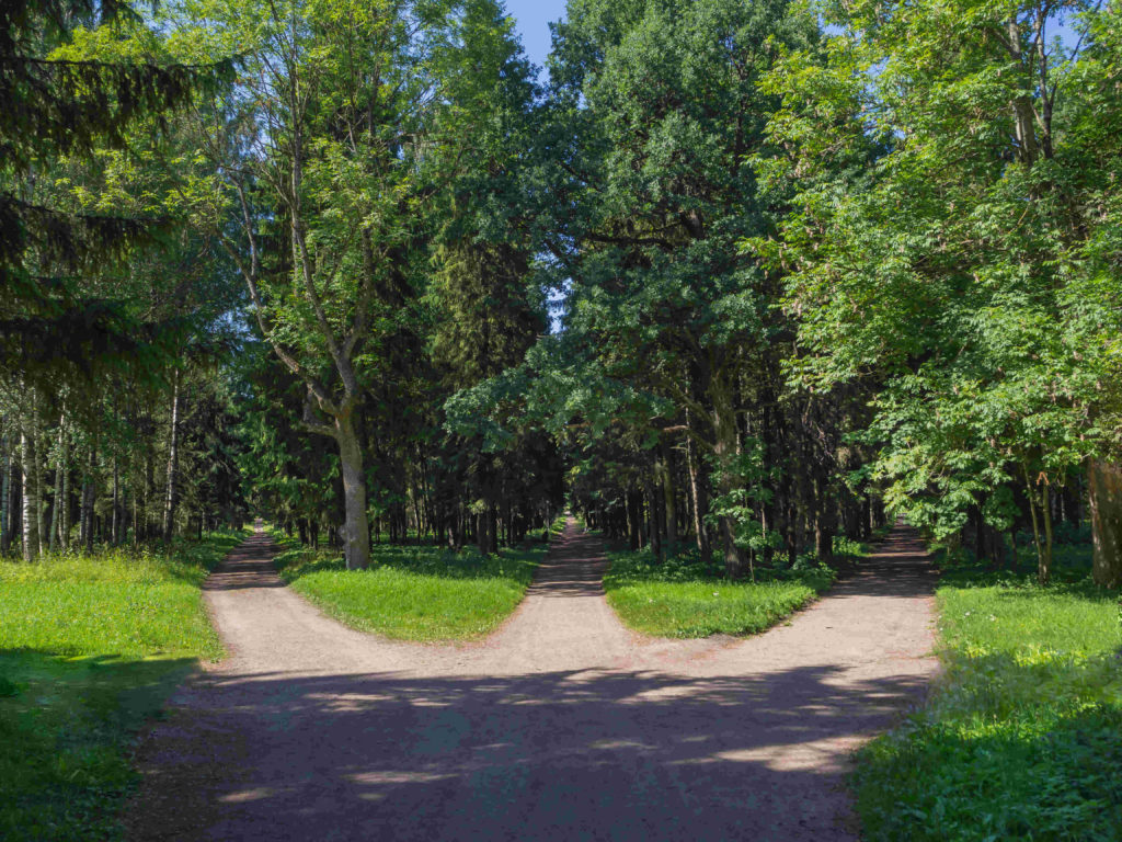 Three pathways to choose from in a forest