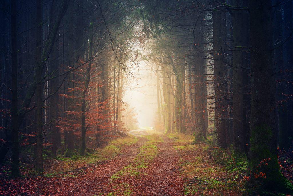 Pathway through trees toward light