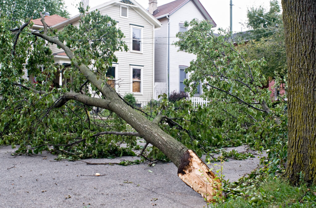 Downed tree in front of homes during an emergency.